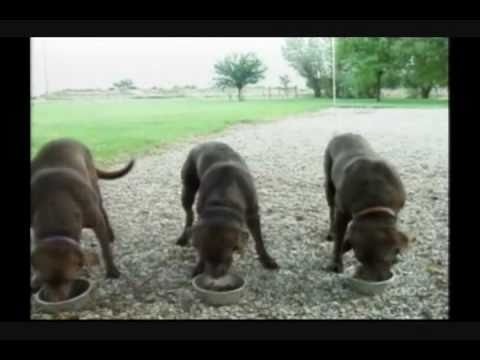 Dogs praying.wmv