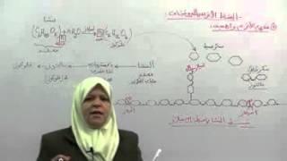 getlinkyoutube.com-1 مفهوم الإنزيم و أهميته - علوم الثالثة ثانوي