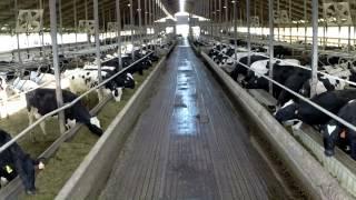 getlinkyoutube.com-Pond Hill Dairy Farm