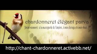 getlinkyoutube.com-Chant Chardonneret d'Algerie Souk Ahras