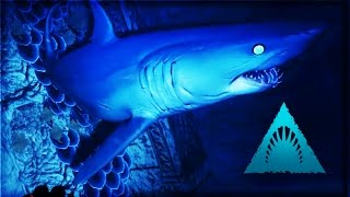 getlinkyoutube.com-Depth   SHARKS IN THE SHADOWS (Blood & Gold Gameplay)