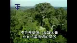 getlinkyoutube.com-熱帶雨林景觀:婆羅洲