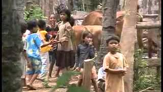 getlinkyoutube.com-Usaha Menuju Desa Konservasi, Desaku Sumber Klampok