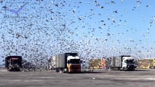 (Photo-Slideshow) International Barcelona Pigeon Race 2013