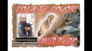 COLA DE COYOTE AMULETO – SUS PODERES | ESOTERISMO AYUDA ESPIRITUAL