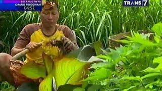 getlinkyoutube.com-Jejak Sigundul - Kue lapis Medro, Abon Nabati buah Klueh & Masakan Rumput Laut