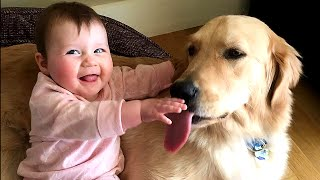 getlinkyoutube.com-Golden Retriever Dog makes Baby laugh very happy | Dog loves Baby Compilation