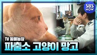 getlinkyoutube.com-SBS [동물농장] - 망원경찰서의 망고경찰냥이