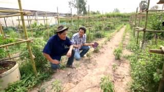 getlinkyoutube.com-ไร่สวนเงินเวียนมา 3 ของ เสนีย์ จิตตเกษม ตอน รายได้เกษตรผสมผสาน พึ่งพากัน อินทรีย์