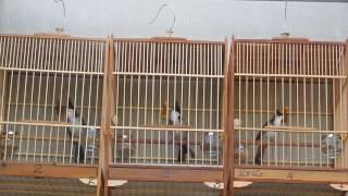 getlinkyoutube.com-MỘC TUYỂN BÌNH ĐIỀN HUẾ PAST 2 - LONG 0905661219