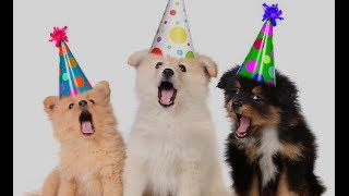 getlinkyoutube.com-happy birthday funny - Dogs Song Happy Birthday