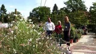 getlinkyoutube.com-Königliche Gartenakademie Berlin . Die Gärtnerei / Die Pflanzen