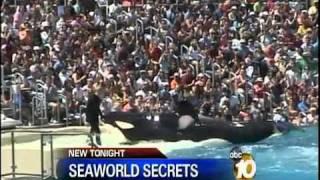 getlinkyoutube.com-Death comes sudden!! SeaWorld Trainer Killed by Shamu - YAHSHUAsavesToHeaven