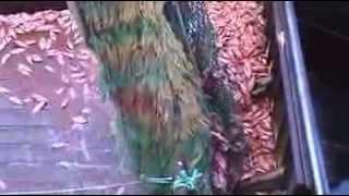 getlinkyoutube.com-عمالقة  صيد الاسماك