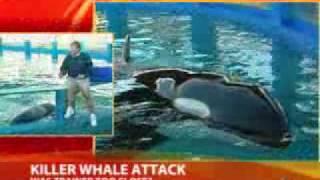 getlinkyoutube.com-!!SEA WORLD TRAINER ERROR CAUSED WHALE ATTACK, MENTOR SAYS!!