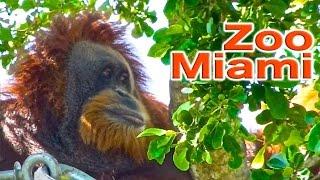 getlinkyoutube.com-Zoo Miami | Traveling Robert