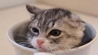 getlinkyoutube.com-日本の子猫が初お風呂に挑戦!海外で「とろけちゃいそう!」と大絶賛の可愛い動画