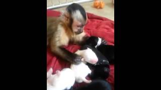 Monkey Pets New Born Puppies- Cute Video