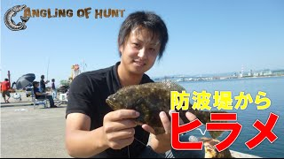 誰でも簡単! 防波堤からヒラメを簡単に釣る方法! ヒラメ 泳がせ釣り