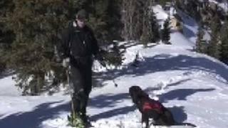 getlinkyoutube.com-Skiing With Your Dog