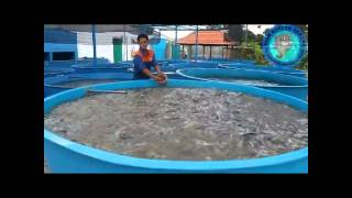 getlinkyoutube.com-FISH BOSTER CENTRE : LELE PADAT TEBAR SISTEM BOSTER