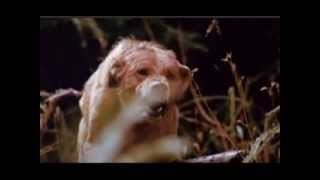 The pack (1977) Trailer