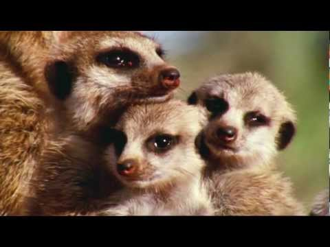 David Attenborough - Wonderful World - BBC - Full HD 1080p