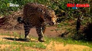 getlinkyoutube.com-Wild animals - Wild Amazon cradle of life - Mysterious tribe