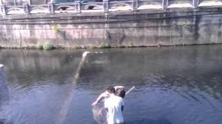 彰化市唯一有魚的溪溝~~外勞特殊補魚法