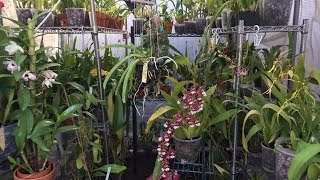 getlinkyoutube.com-October Greenhouse Tour Orchids