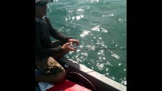 getlinkyoutube.com-ตกปลาสากแป๊บเดียว60ตัว.แสมสาร.เรือไต๋เต่า