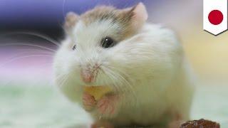 getlinkyoutube.com-「ハムスター釣り」動物虐待か