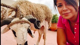 getlinkyoutube.com-شاهد عارضة الأزياء ليلى الحديوي في عيد الأضحى