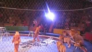 getlinkyoutube.com-أسود تلتهم مدرب أثناء عرض السيرك أمام الجماهير