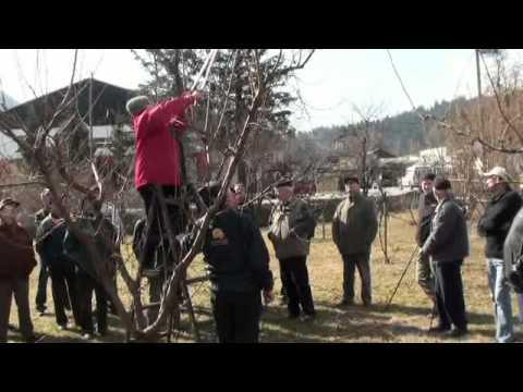 Obrezovanje Šolski sadni vrt Mozirje.mp4