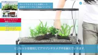 getlinkyoutube.com-【charm】カージナルテトラ・水草と水槽セットの設置1 -器具・水草篇-