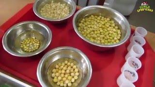 Семья Бровченко. Огород. Посадки в теплице (ч.1) - помидоры, зелень, лук, салаты.