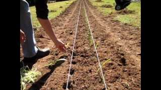 getlinkyoutube.com-Planting Onions