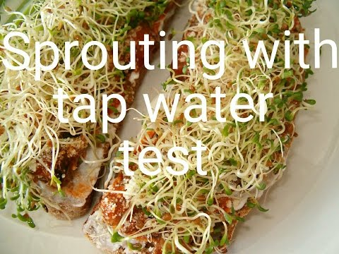Sprouting seeds in tap water and more (test)