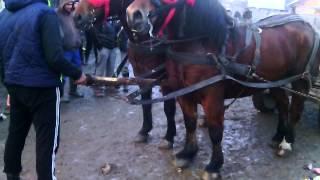 getlinkyoutube.com-caii lui costea din sacele