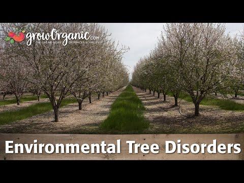 Environmental Tree Disorders