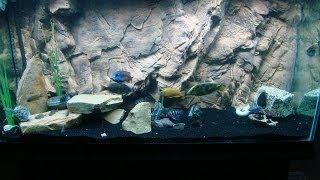 getlinkyoutube.com-3D Aquarium Background Basic Installation Details