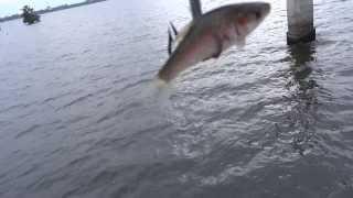getlinkyoutube.com-สุดยอดการตกปลาของชาวพม่า myanmar Fishing stile