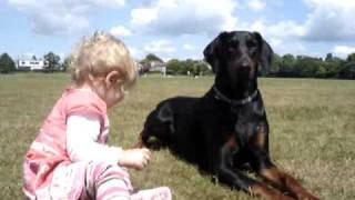 getlinkyoutube.com-Doberman protects baby toddler at the park. MUST SEE!