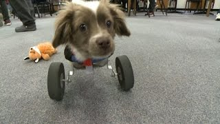 Students make doggy wheelchair width=