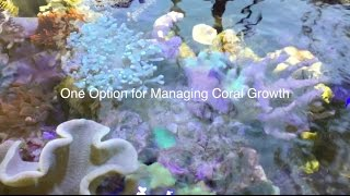 getlinkyoutube.com-A unique way to manage coral growth - AmericanReef reefkeeping video - keeping a salt water aquarium
