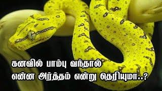 getlinkyoutube.com-கனவில் பாம்பு வந்தால் என்ன அர்த்தம் என்று தெரியுமா..?