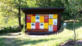 getlinkyoutube.com-Slovenian bee-hive and bee-keeping tradition