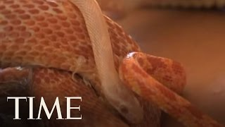 Slithering Masseurs In Israel  | TIME