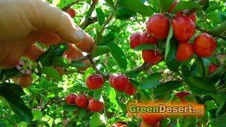 5 fruit trees that will have you eating for the whole year!
